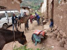 Cachora arriero silvio cargando mulas 3