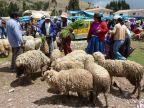 Perou – Cuzco (7) Marché aux bestiaux d'Inkillpata