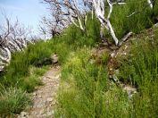 Resize of PR1-3 (13) Chemin de crete Cote Sud Crame 4