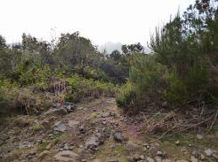 Resize of PR17 marque de sortie partie Levado do norte