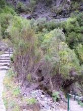 Resize of PR9 (06) Escalier Levada Calderao do Inferno