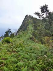 Resize of Vereda Boca do Risco-Canical (06) sentier de crete