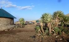 Simien 4 Geech camp (4)
