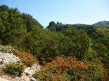 CaboVerde2013-H-30 Route Pico da Cruz