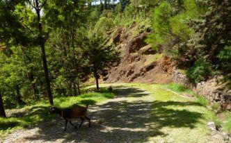 CaboVerde2013-J-02 Apres Pico da Cruz route pavee