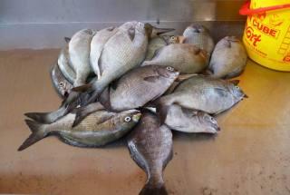 CaboVerde2013-X-44 Mindelo Marche poisson Daurades
