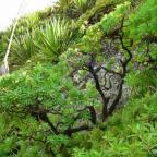 Cap Vert – Traversée de Santo Antao (Botanique)