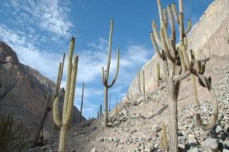 peru-cotahuasi canyon station de cactees 2
