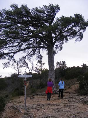 Sierra de Montsant (CIRCULAR DESDE ULLDEMOLINS) 3