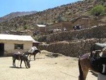 J2 27-ucu mules-arrive