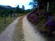 Camino Primitivo Mayake 33