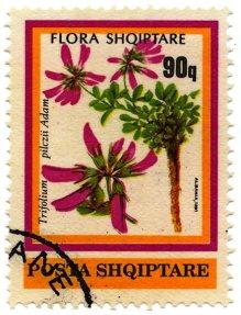 Flora shqiptare stamp 3