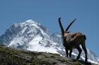France TMB – mon tour du mont blanc en bivouac et 8jours